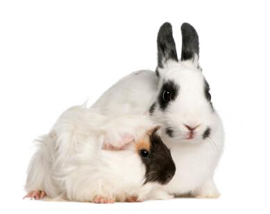 Kaninchenimpfstoff gegen RHDV